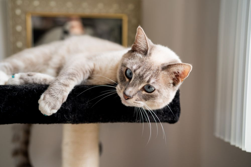 Pet cat laying down on cat perch